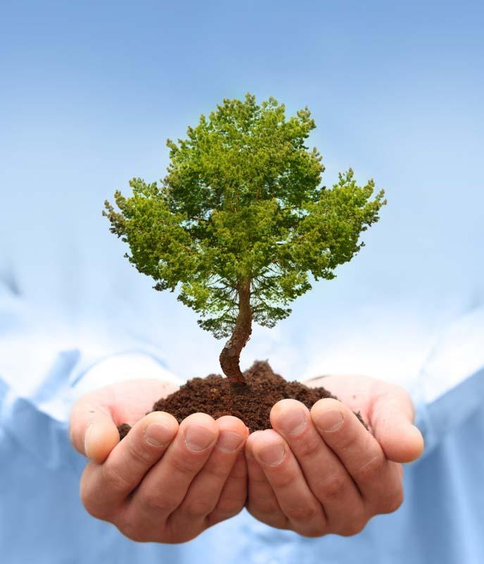 La Producción Agropecuaria Moderna y su Impacto Ambiental   Noticias  Agropecuarias