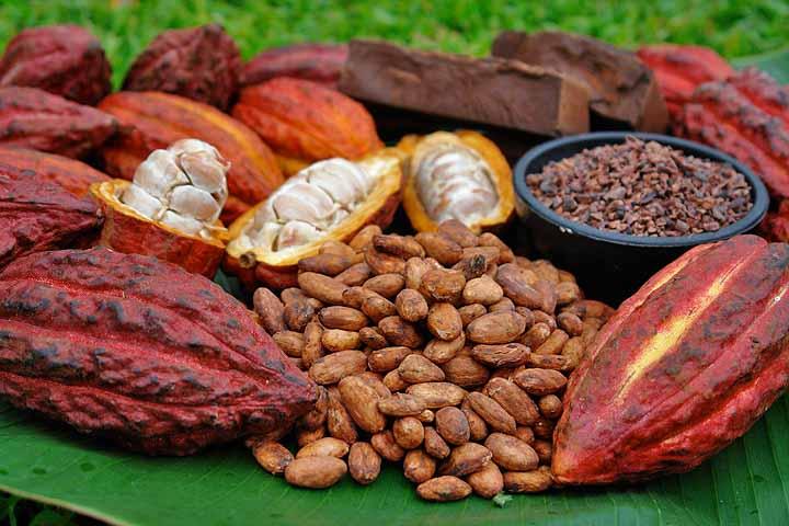 En cifras, exportaciones de cacao ecuatoriano en 2018 | Noticias ...
