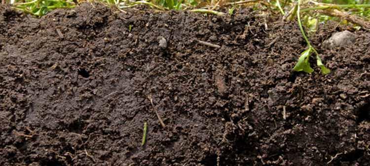 Los beneficios de mejorar la salud del suelo | Noticias Agropecuarias