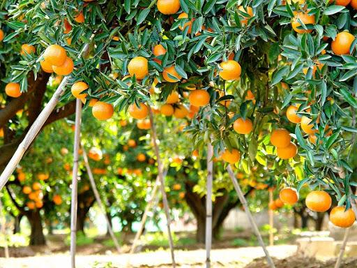 Israel cambia las naranjas por la tecnología | Noticias Agropecuarias